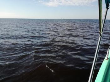 Marea roja en Manzanillo provoca prohibición en consumo de moluscos