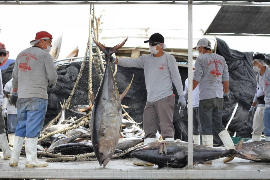 Agricultura levanta veda para la pesca de atún en el pacífico mexicano