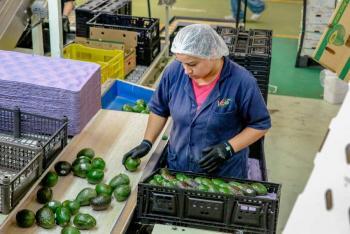 Ligera recuperación de diciembre acorta desempleo en el país
