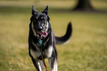 Los perros de Joe Biden, Champ y Major, llegan a la Casa Blanca