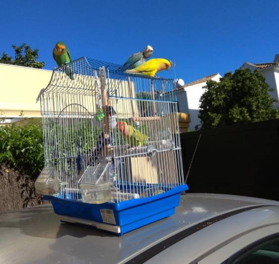 Trío de loros causa sensación tras liberar a otras aves de sus jaulas