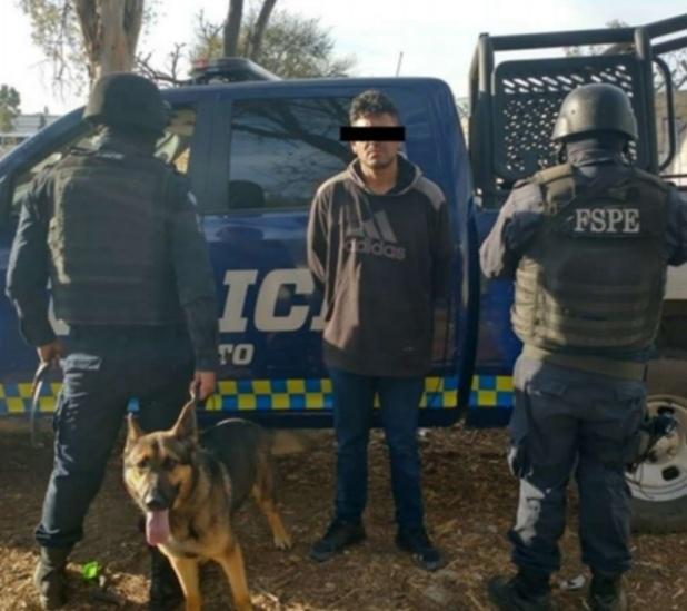 """""""Patrulla canina"""" confisca más de 700 dosis de droga en Guanajuato"""