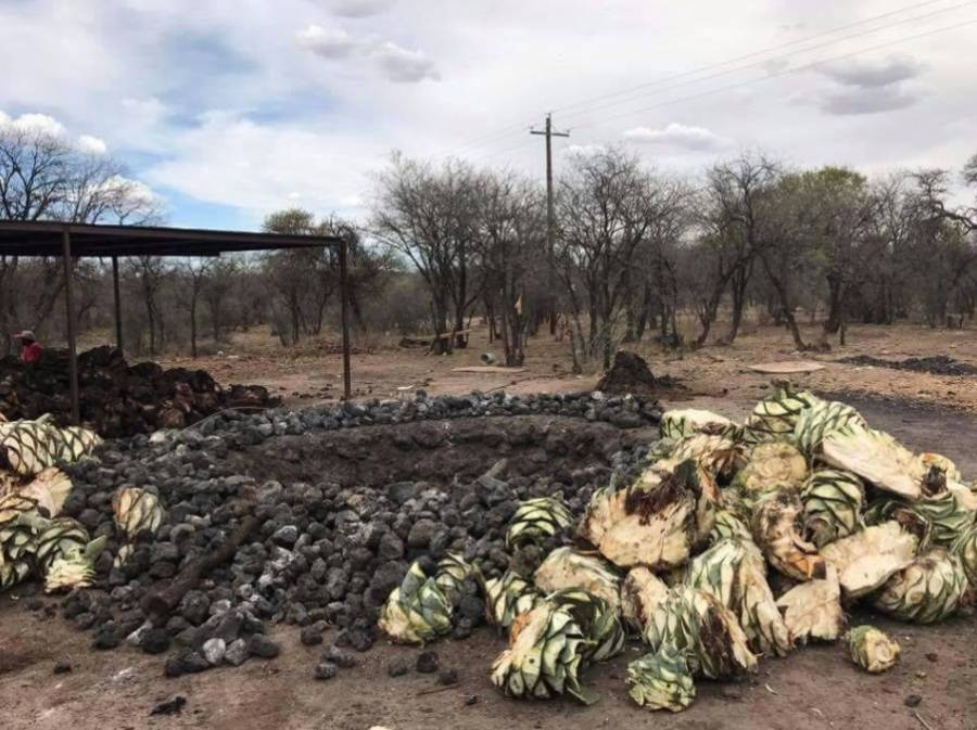 Crean Ruta del Mezcal en Pueblo Mágico de Durango