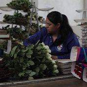 Garantizada producción y abasto de flores para el 14 de febrero: Agricultura