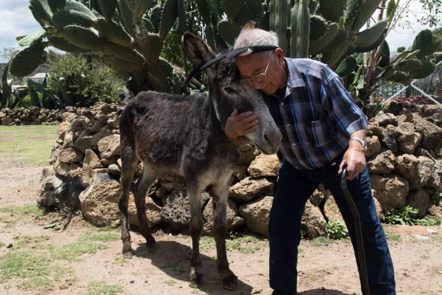 """Crean una raza de burro """"100 por ciento"""" mexicana"""