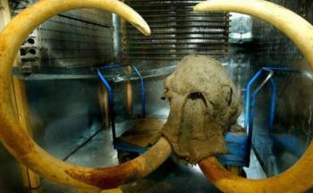 Dientes de mamuts contienen el ADN más antiguo