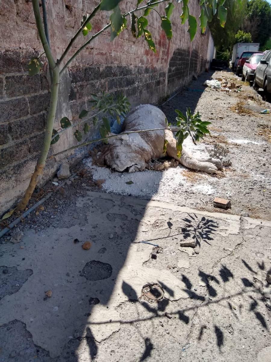 Abandonan el cadáver de un León en Iztapalapa