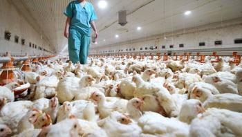 Reportan en Rusia el primer caso de infección humana de gripe aviar