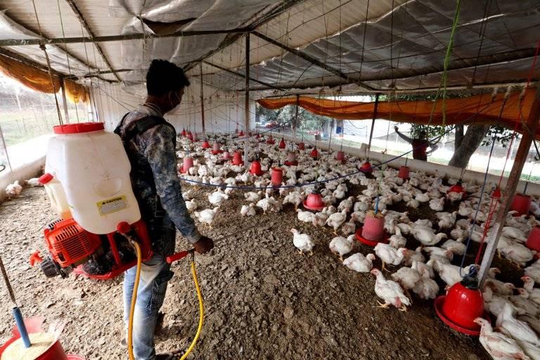 Detectan en Rusia contagio de gripe aviar H5N8 en humanos