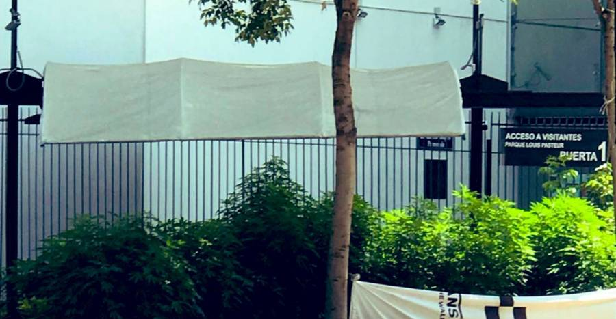 Senado pide Sheinbaum retirar plantón del parque Luis Pasteur