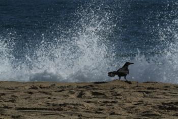 No se espera un tsunami en costas del Pacífico mexicano: Protección Civil