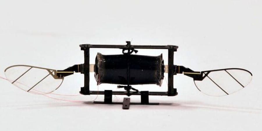 Científico desarrolla dron del tamaño de un insecto