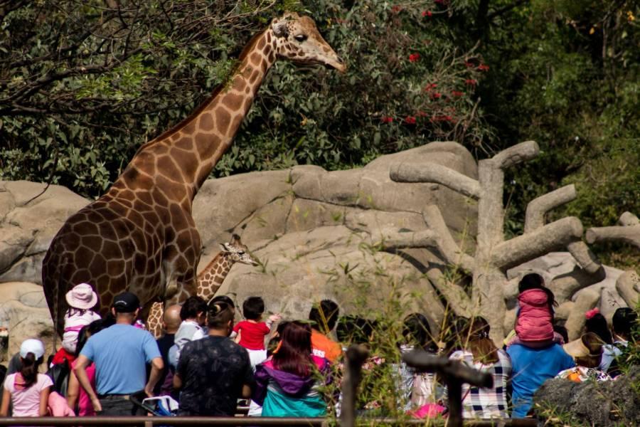 Tras 11 meses cerrados, reabren zoológicos en la CDMX