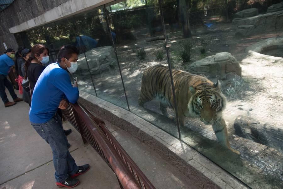 Reabren zoológicos en la Ciudad de México