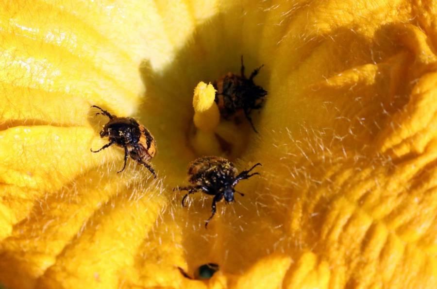 Incrementa el polen, riesgo de contraer Covid-19