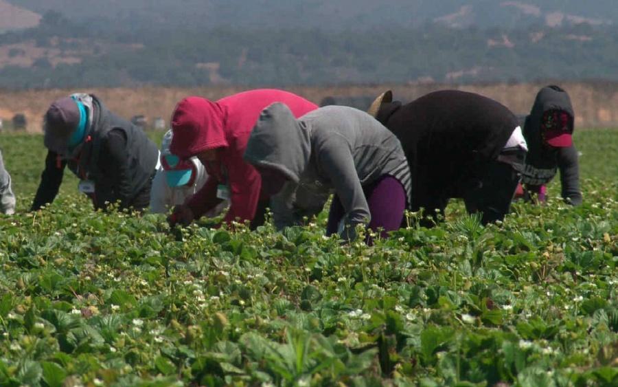 Serán vacunados contra Covid jornaleros mexicanos en Canadá