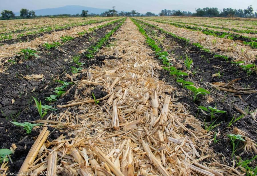 Promueve Secretaría de Agricultura la disminución del uso de fuego en parcelas