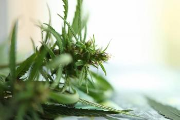 Marihuana, ¿un ladrillo más para la recuperación?