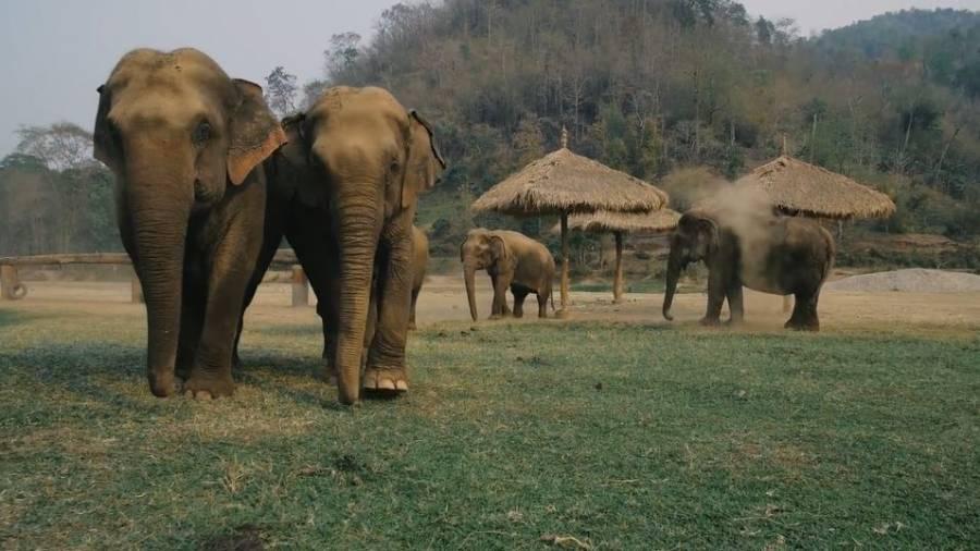¡Atención! Elefante africano en peligro de extinción