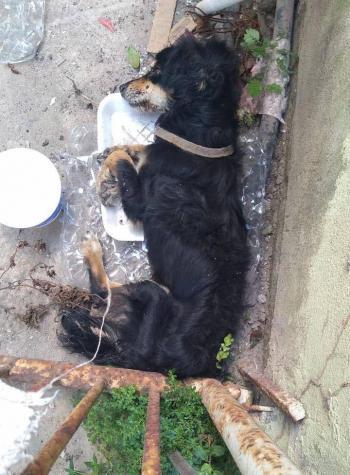 Diversos comentarios en redes sociales recibe petición de ayuda de Ricardo Salinas Pliego para un lomito abandonado