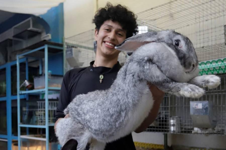 Estudiante mexicano cría los conejos más grandes en Puebla