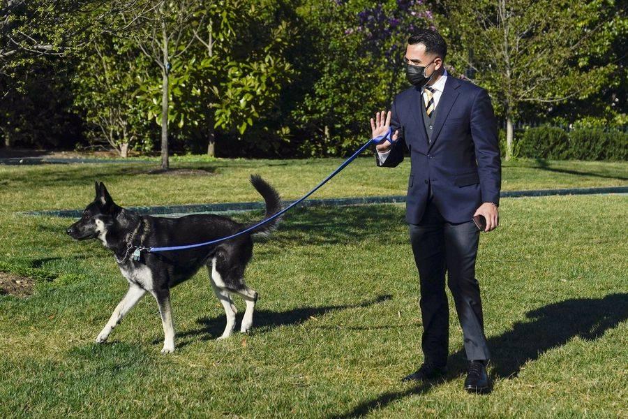 Nuevamente, perro de Joe Biden muerde a otro trabajador de la Casa Blanca