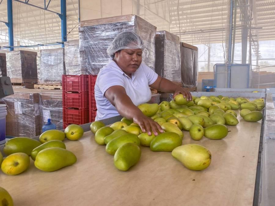 Convoca Agricultura al Premio Nacional de Sanidad Vegetal 2021