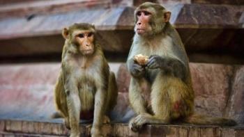 Detienen a dos hombres que usaban monos para robar dinero en India