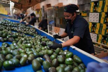 Precio del aguacate alcanza los 80 pesos por kilo: Profeco