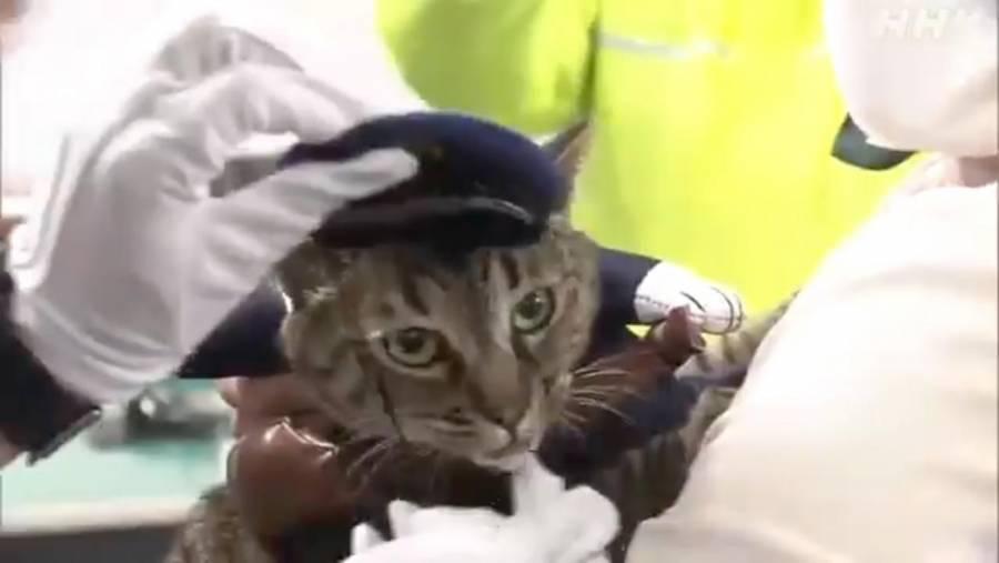¡Jefa de la policía! Gatita salva la vida a un hombre y se convierte en agente