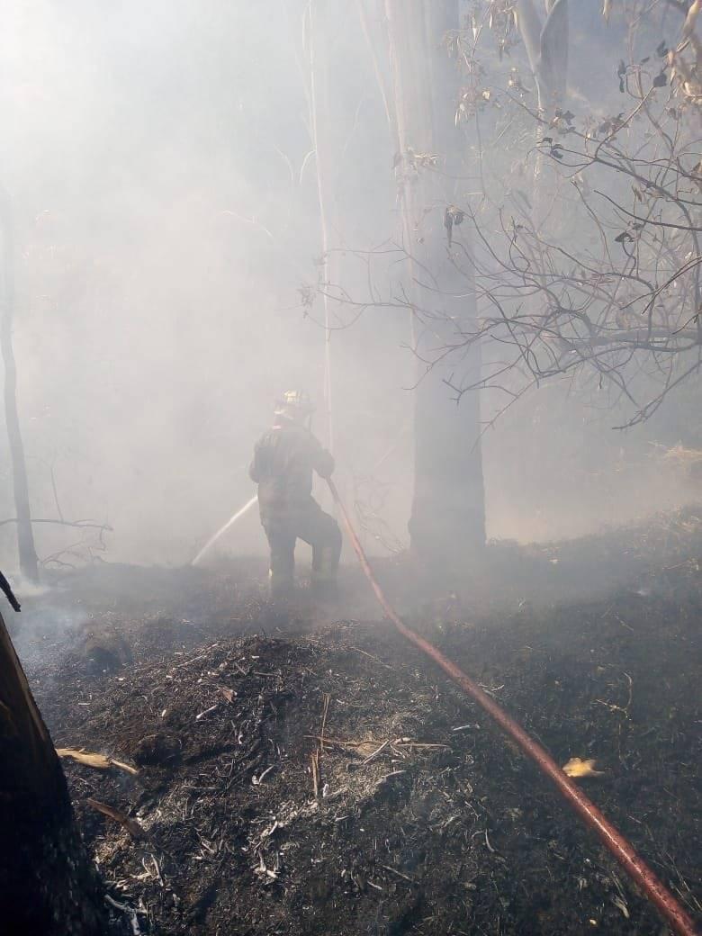 Controlado al 95 por ciento fuerte incendio en el Bosque de Chapultepec