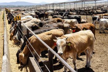 Destaca México a nivel mundial como productor de proteína animal