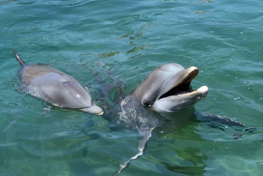¡Punto para los Delfines! Ellos sí se saben los nombres de sus amigos