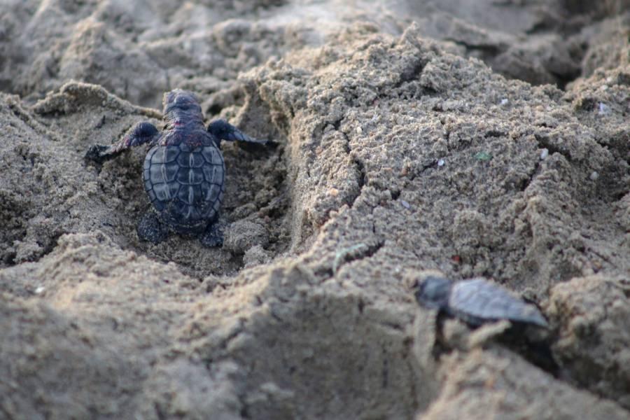 SEDECO y PROFEPA rescatan reptiles en mercado Nuevo San Lázaro