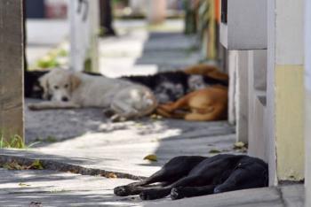 """Morena propone crear la figura de las """"mascotas comunitarias"""""""