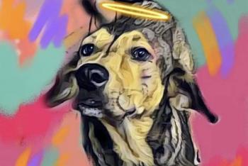 """Vinculan a proceso a presunto asesino de perrito """"Rodolfo Corazón"""""""