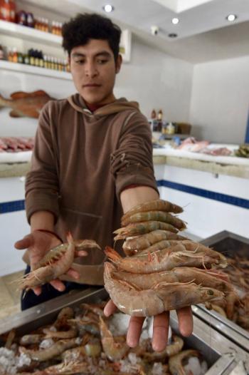 Acusan discriminación por suspensión de certificación de camarón mexicano