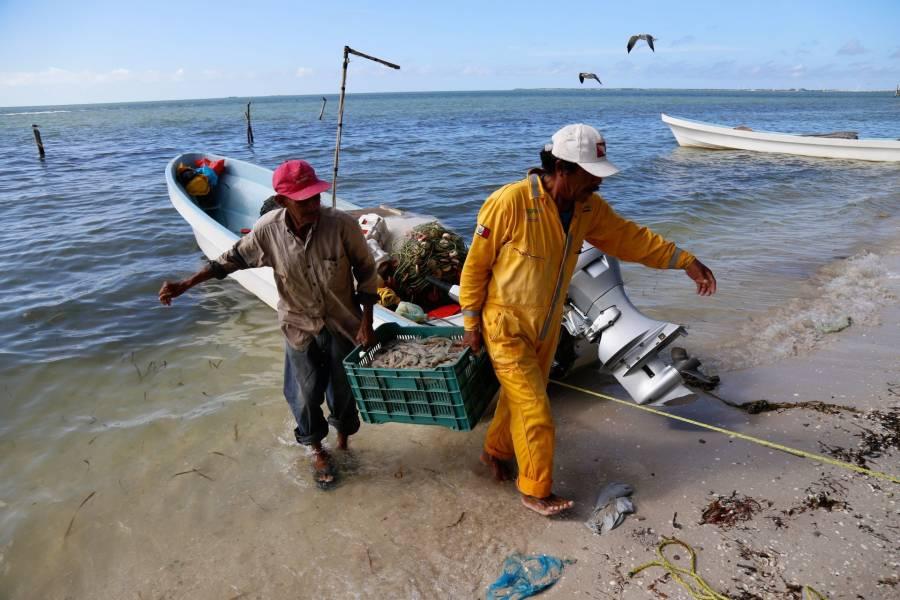 Advierten pérdidas millonarias al sector pesquero por embargo camaronero