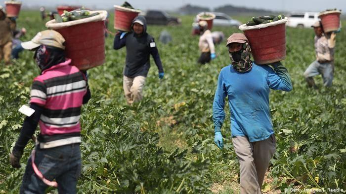 México pide a EU garantizar derechos de trabajadores migrantes agrícolas