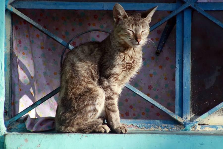 En Chicago liberan a cientos de gatos para acabar con plaga de ratones