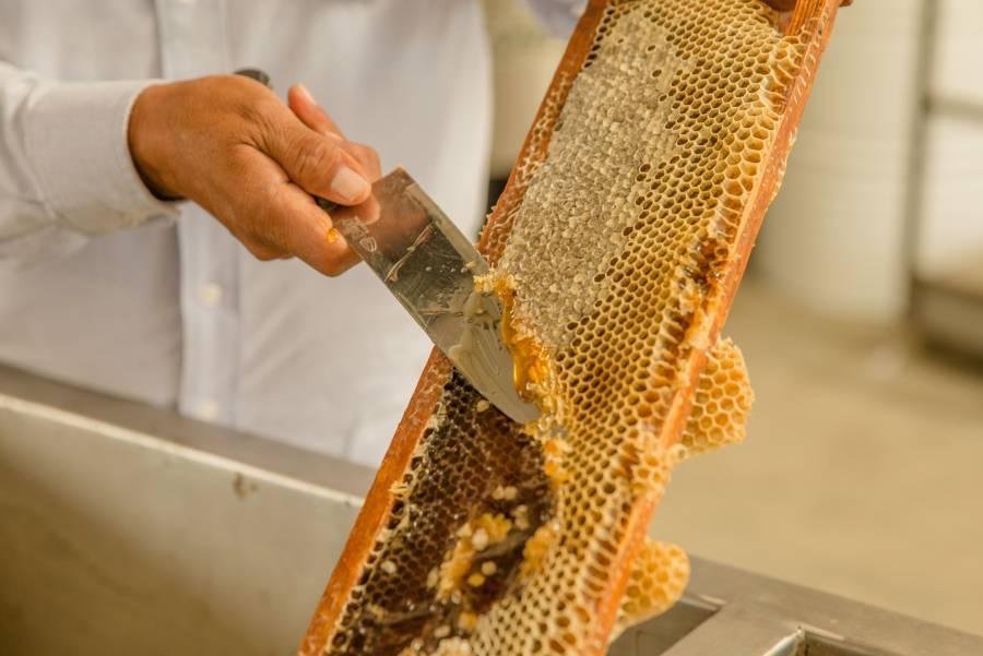 Prevén crecimiento en la producción de miel mexicana este año