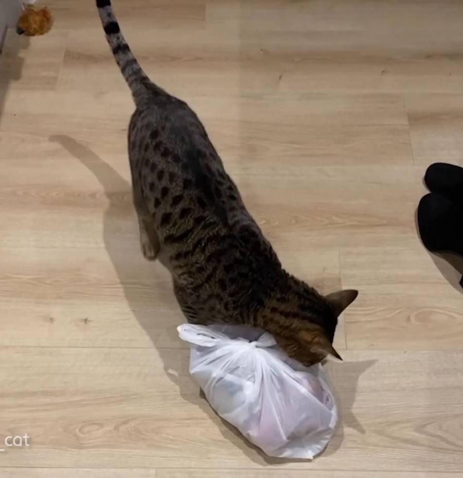 """¡Con las patas en la masa! Gatito roba """"disimuladamente"""" una bolsa de costillas"""