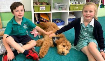 Perros ayudan a combatir el estrés en estudiantes y mejorar sus habilidades cognitivas