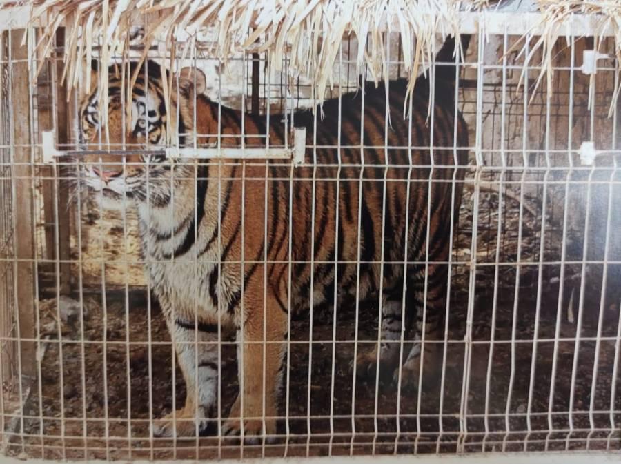 Durante operativo FGR logra asegurar animales exóticos en Zapopan, Jalisco