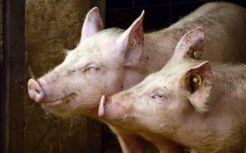 Profepa clausuró cuatro granjas de cerdos en Yucatán