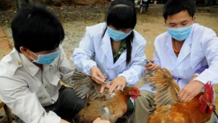 China confirma primer contagio humano de cepa de gripe aviar