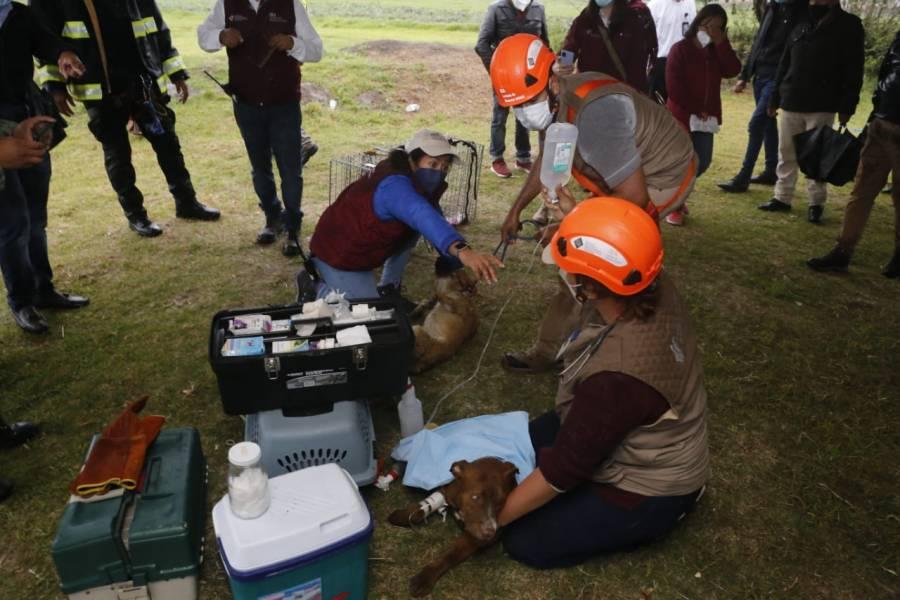 Video: Perritos que cayeron en socavón de Puebla son rescatados