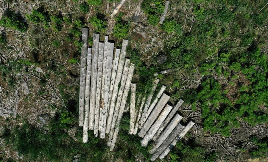 Cada segundo talaron 24 árboles en Brasil, durante el 2020
