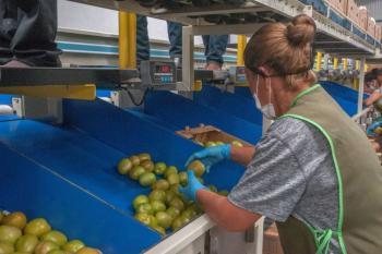 Promueven proyectos agrícolas enfocados en pequeños y medianos productores