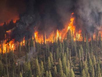 Arde Siberia a causa de incendios forestales